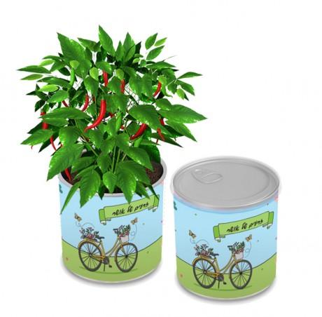 גינת תבלינים בפחית